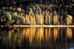 Sprakande höstfärger reflekteras av Sidsjöns stilla vatten hösten 2010.