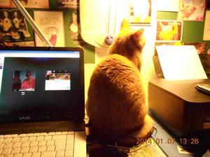 Sissi hälsar till alla rödvita katter som fanns i VLT 22/1 jag deltar ocksånär matte sitter vid datorn ! mest till Messi som är en kopia av mig !