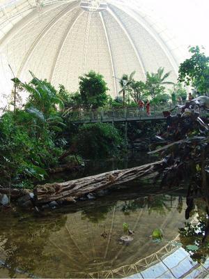 Besök djungeln i Berlin. På Tropical Island är det möjligt.