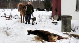 Under tisdagen dödade en varg en hjort och skadade en annan.