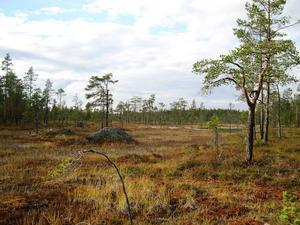 På Gryssjömyran trivs vadare som grönbena och gluttsnäppa. Dessutom är gulärlan synlig där.
