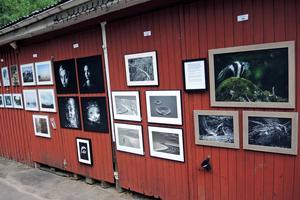 Besökarna kunder strosa runt utanför dansbanan för att titta på fotografierna och kunde även rösta på sin favorit i