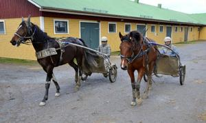 Lina Bergström och Rikard Skoglund har precis varit ute och tränat Dats Marido och Labolina Bob – två hästar som de har förhoppningar på.