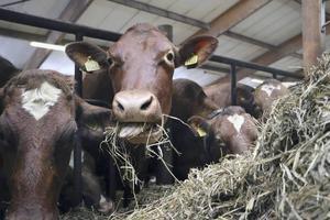 Bönder i länet får vänta i minst flera månader till på jordbrukarstöden.