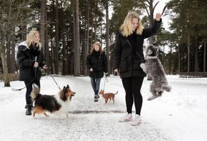 Rebecca Nygren, Frida Öholm och Boa Strandberg är alla med i Gävle Hundungdom. På söndag bjuder de på uppvisning i agility tillsammans med sina hundar Chippen, Ellie och Eco.– Vi kommer även att låna ut våra hundar om någon vill prova, berättar tjejerna.