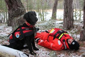 Triss klarade uppdraget. Stefan Östling, Sjöräddningssällskapet, spelar människa i nöd och hunden hittar honom.