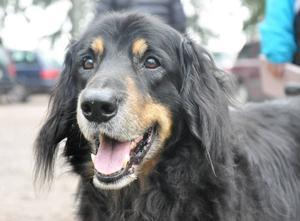 För hunden finns det flera faror på sommaren. Kolla in veterinärens lista. Hunden på bilden är fotad i ett annat sammanhang.