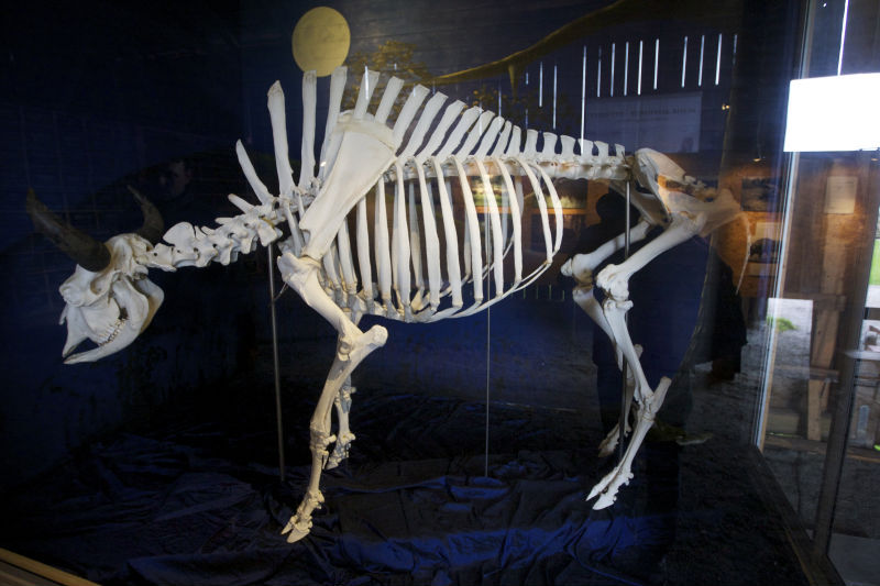 Lasarett vill begrava skelett