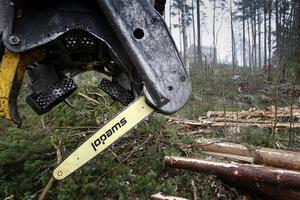 Nu kan du se var det finns ansökningar om skogsavverkning.