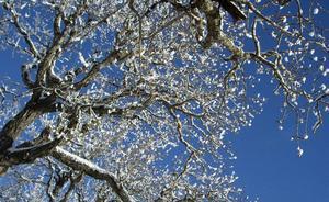 Himmelskt vackert. Tittade upp mot himlen från en parkbänk iBadhusparken. Foto: Berith Sahlin