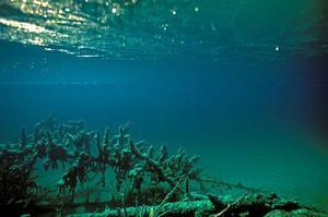 Det märkligt smaragdgröna vattnet i Blanktjärnarna fascinerar alla besökare. På botten ligger träd som fallit ner från den branta sandåsen intill.