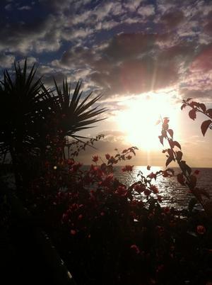 Fick chansen att i vinterkalla februari fota både fina blommor och solnedgång på Teneriffa