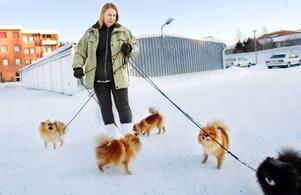 """Marita Lindströms hundar Leo, Nova, Puma, Virus och Ici får sällskap på nyårsafton för att de inte ska bli rädda. """"Jag tycker inte att fyrverkerier                    ska förbjudas, men att det ska regleras så de bara används vissa dagar"""", säger hon.  Foto: Ulrika AnderssonLinda Lindström, Sundsvall, har hundarna Vilde och Holly och firar jul och nyår hos sin mamma i Torvalla. Familjens sju hundar rastas tidigt på nyårsafton för att undvika fyrverkerier."""