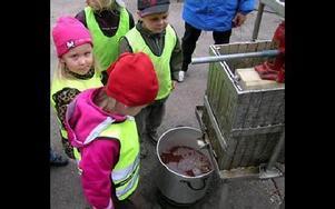 -- Oj, titta det rinner ner i hinken, sa barnen. Bland andra är det Erik Holeriks och Tova Andersson som ser vad som händer när pressen arbetar.FOTO: KENNETH ISELI