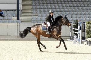 Ingemar Hammarström på hästen Cascara.