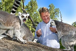 Lemurerna tillhör Tom Widorsons favoriter i Furuviksparken. För att få riktigt bra bilder lockade Tom till sig aporna med lite russin.