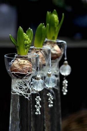 Hyacinter är billiga julblommor som du själv kan arrangera fint. Juldoften de sprider ingår i priset.