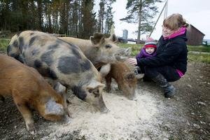 Emelie Eriksson med dottern Tyra Eriksson 18 månader har delat ut mat till Linderödsvinen som jagade bort en varg ur hagen.