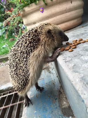 Bild på en hungrig kotte som Linda tog i sin trädgård.