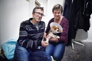 Roger och Karin Svensk pysslar om sin vovve Chessie, som blev attackerad av en annan hund i förra söndagen.