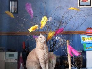 Vår katt Zigge gillar påskriset med fjädrarna i. Bilden är tagen av Merja Nordensol i Västerås