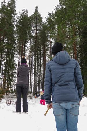 Eleverna från Hede syftade med bambukäppar mot en 23 meter hög tall och beräknade gemensamt  trädets höjd. De underskattade höjden, men bara med 1,5 meter. Vid trädet Felix Johansson. Elvira Revelj gick med måttbandet mot Tova Nilsson och Loke Persson.