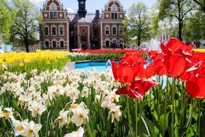 Nu blommar tulpanerna i Rådhusparken, men snart ska de ersättas av sommarblommor.