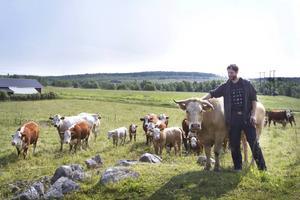 Varje grupp av kor har sin ledarko, vilken Mats är väldigt nära för att visa vem som bestämmer.