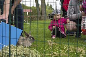 Förutom ponnyridning och ansiktsmålning fanns smådjur på plats. Selma Walter hade stannat till för att kika på kaninen.