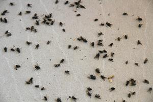 Ett oräkneligt antal flugor tar sig in på Urban Karlssons inglasade balkong under stora delar av året.
