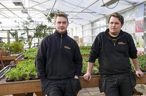 Bröderna Jonas och Daniel Östman öppnar till veckan nya Sundåsens Handelsträdgård som kommer att ha fokus på allt som handlar om trädgård och utomhusväxter.
