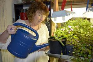 Anna-Karin har en odlingsställning i källaren. Här grönskar det, även under vintern.