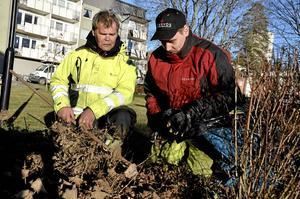 Fältarbete i vardagen. Roland Haglund är handledare och Daniel Engström har gått från praktik till en anställning hos Egeryds fastighetsförvaltning i Lindesberg.