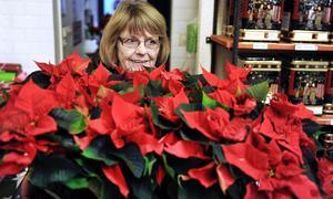 Julstjärnorna är här! Till advent säljer AnnBritt Wikström på Presenter och Smide många julstjärnor. De röda säljer bäst.