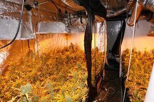 Den här odlingen upptäcktes när polisen i Stockholm sprängde ett stort cannabisnätverk 2010.