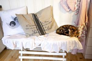 Kattungen Izzie bland romantiska kuddar.
