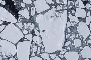 Inte bara Arktis. Temperaturen höjs snabbare i Västmanland än på andra håll.foto: scanpix