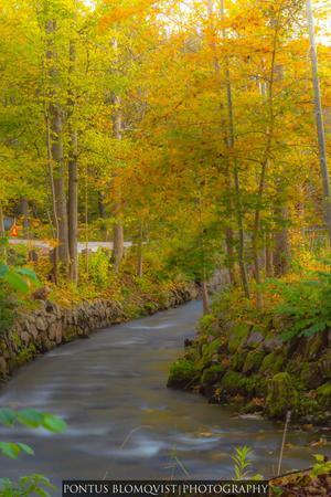 passade på att fånga höstens färger