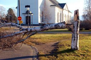 Stormen knäckte många träd även i Svegs tätort. Under natten mot söndagen var också många hushåll runt om i Härjedalen strömlösa.Foto: Carin Selldén