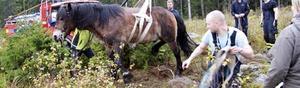 En kämpe. Hästen och räddningstjänsten slet i två timmar innan hästen till slut kunde kämpa sig upp på stadiga ben med hjälp av en lyftanordning.