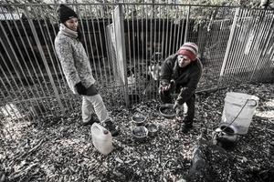 Dags för utfodring av hundarna. Att driva slädhundsverksamhet är som att vara bonde, djuren kräver mycket jobb.