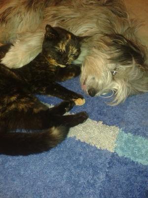Katten Kajsa-Kavat-Katt & Ianira-Piran-Peach!!