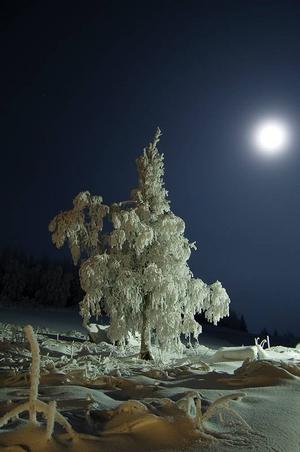 Årets vinter har bjudit på många fina bilder av rimfrost och snörika landskap och det har varit svårt för juryn att välja. En bild som stack ut och som vi till slut valde var Ulf Larssons frostiga månskensbild. Den känns kuslig samtidigt som den är vacker. Det är utmanade att fota under mörkare förhållanden då det gäller att tänka på hur ljuset faller in i bilden. Med hjälp av månskenet har Ulf Larsson under kyliga förhållanden tagit en bild som väcker känslor.
