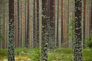 Vi tog en promenad i Riddarhytteskogarna, glad att jag tog med kameran denna lite disiga höstdag.