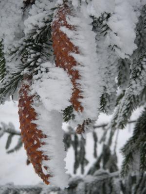 Bilden tagen under tiden det var krafitg rimfrost i Västeråstrakten under januari.