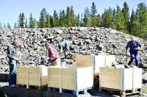 Två ton sten plockades ihop i Marieby. Nästa vecka ska den brännas och under Ovikenveckan i juli ska den bli puts på gamla kyrkan i Oviken.