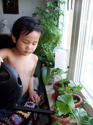 Ryan, mitt lilla barnbarn, är noga med att vattna sina Mårbackasticklingar, då han besöker mej. Han ser med förvåning hur dom växer.
