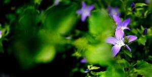 Marie började dra upp plantor under 90-talet och har sedan dess märkt av den ökade miljömedvetenheten hos människor.