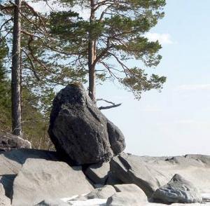 Jättestora stenar blev ibland infrysta i isen och forslades långa sträckor. Några flyttblock hamnade på högkant som detta vid Andersön.     Foto: Seved Johansson