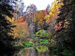 Hösten är ju en vacker årstid med alla sprakande färger och tycker man om att fotografera är det inte svårt att hitta fina motiv. Den här bilden tog jag på promenadstråket vid svartån som går från centrum mot Vallby i Västerås.